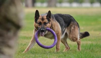Мін'юст почав продавати собак за борги їх власників