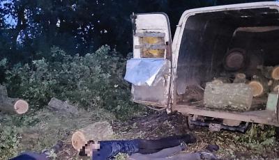 Незаконно вирубували дерева: у Новому Бузі затримано злочинну групу «чорних лісорубів»