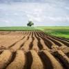 Податок за пай: «Слуги народу» готують «сюрприз» дрібним фермерам