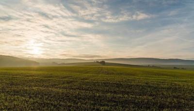 Земля в Украине подорожает до конца года: эксперт спрогнозировал цены в регионах