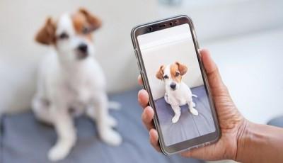 Мобильное приложение Snapchat научилось определять породы собак и виды растений