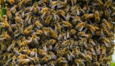 На Тернопольщине умер мужчина, которого покусал рой пчел